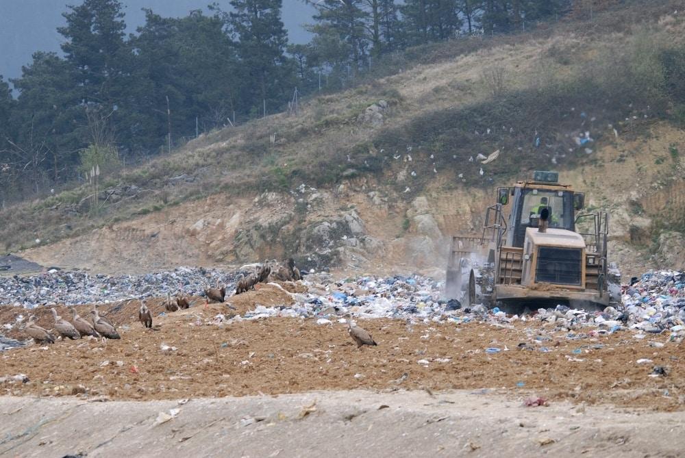 Buitres leonados en la zona de rechazo de una Planta de Transformación de Residuos Sólidos Urbanos